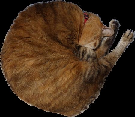 アンモナイトっぽい猫